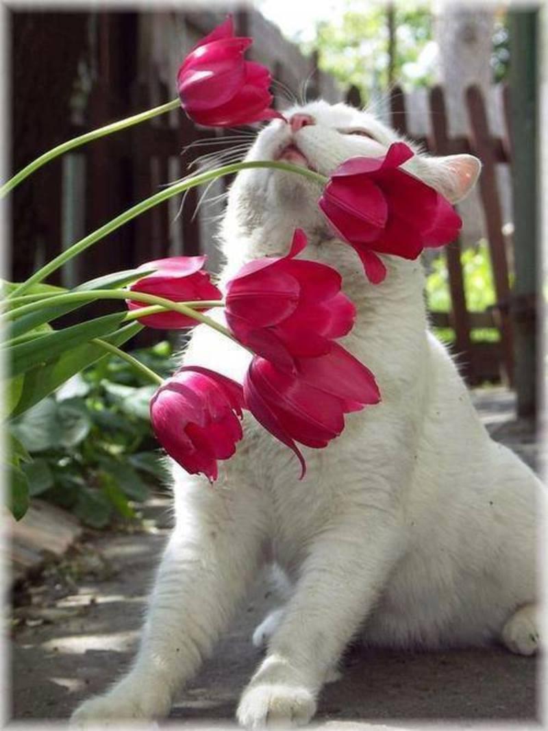 un micio che odora i fiori! che dolce questo micio qui! dans gatti chat-et-fleurs